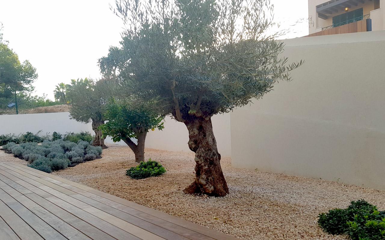 gomariz-jardineros-galeria-11-palma-de-mallorca