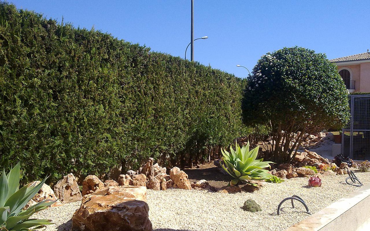 gomariz-jardineros-galeria-14-palma-de-mallorca