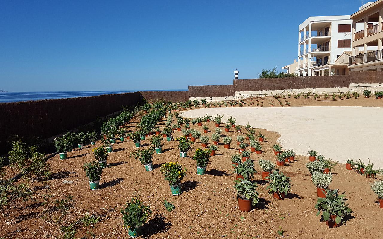 gomariz-jardineros-galeria-22-palma-de-mallorca