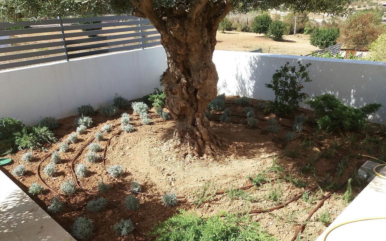 gomariz-jardineros-galeria-23-palma-de-mallorca