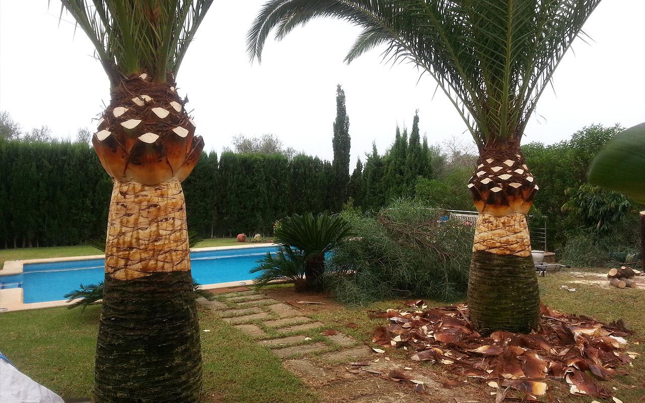 gomariz-jardineros-galeria-7-palma-de-mallorca