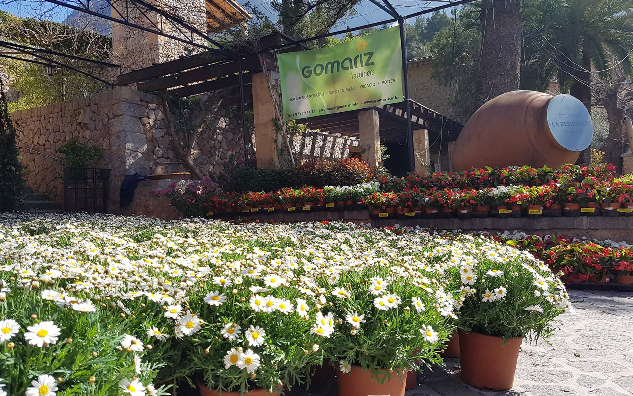 gomariz-jardineros-galeria-8-palma-de-mallorca